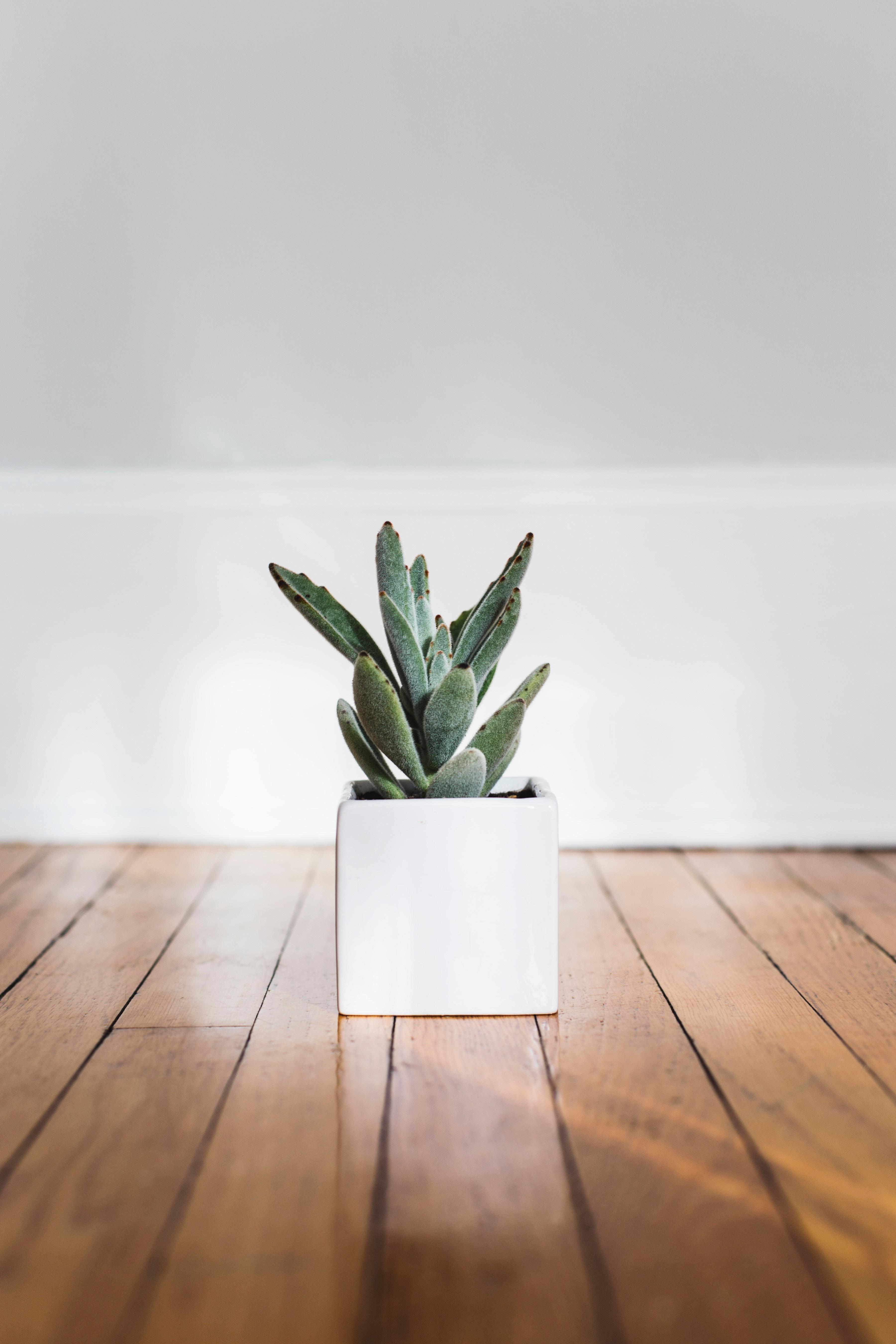 En grundig gulvslibning - ren forkælelse for dit trægulv