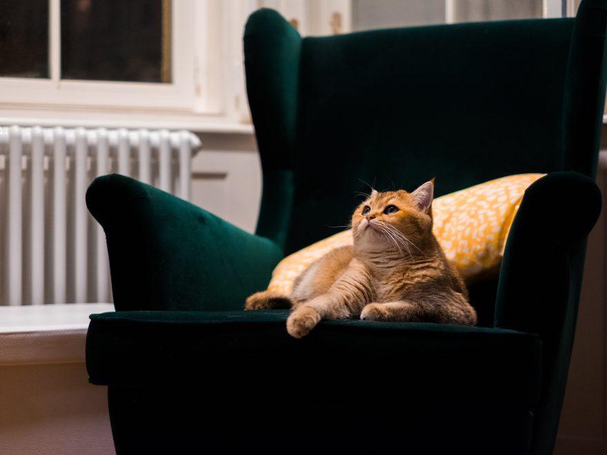 En varmepumpe kan hjælpe dig med at spare på varmeregningen - uden at du behøver spare på varmen
